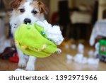 dog mischief. funny and guilty... | Shutterstock . vector #1392971966
