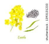 canola or colza. flowers  seeds ... | Shutterstock .eps vector #1393131233