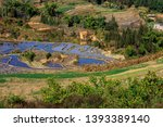 honghe yuanyang  samaba rice... | Shutterstock . vector #1393389140
