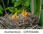A Close Up Of The Nest Of...