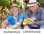 winemakers father and son in... | Shutterstock . vector #1393591433