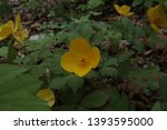 small yellow flowers in the... | Shutterstock . vector #1393595000
