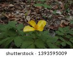 small yellow flower in the... | Shutterstock . vector #1393595009