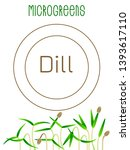 microgreens dill. seed... | Shutterstock .eps vector #1393617110