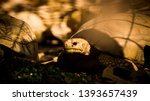 Stock photo tortoise wildlife photos tortoise in jungle beautiful tortoise 1393657439