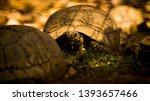Stock photo tortoise wildlife photos tortoise in jungle beautiful tortoise 1393657466