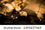 Stock photo tortoise wildlife photos tortoise in jungle beautiful tortoise 1393657469