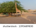 al ain  united arab emirates  ... | Shutterstock . vector #1393689830