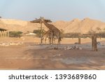 al ain  united arab emirates  ... | Shutterstock . vector #1393689860
