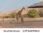 al ain  united arab emirates  ... | Shutterstock . vector #1393689863