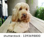 puppy dog on wooden table.... | Shutterstock . vector #1393698800