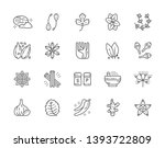 Set Of Spice Line Icons. Nutme...