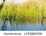 Green Spring Grass With...