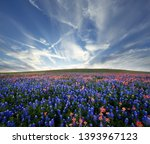 Field Of Flowers With Texas...