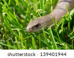 Blind Worm In The Green Grass