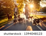 Stock photo dog walker at work couple dog walker walking with a group dogs in the park 1394048123