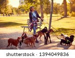 Stock photo happy woman dog walker with dogs enjoying in funny walking outdoors 1394049836
