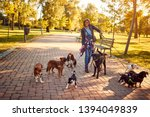 Stock photo professional dog walker on the street with dogs 1394049839