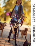 Stock photo happy dogs walking outdoors and enjoying with dog walker 1394049860