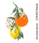 watercolor isolated botanical... | Shutterstock . vector #1394074646