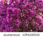 rhododendron pink flower fresh... | Shutterstock . vector #1394230520