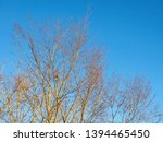 Stock photo falling leave autumn branch tree clear blue sky background 1394465450