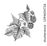 hand drawn raspberry branch...   Shutterstock . vector #1394654726