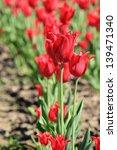 outdoor image of background of... | Shutterstock . vector #139471340