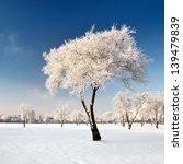 Hoar Frost On Trees In Winter