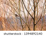selective focus photo.  the...   Shutterstock . vector #1394892140