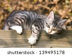 Stock photo kitten playing 139495178