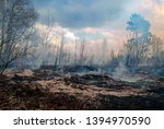 Forest Fire In The Afternoon....