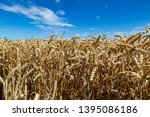 a field with wheat in front of...   Shutterstock . vector #1395086186