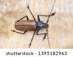 giant fijian longhorn beetle... | Shutterstock . vector #1395182963