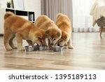 Cute Akita Inu Puppies Eating...