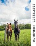 Two Horses In A Field Taken On...