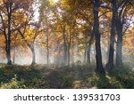 very beautiful landscape in the ... | Shutterstock . vector #139531703
