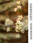 blooming plum tree closeup.... | Shutterstock . vector #1395338393