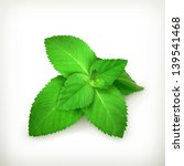 Fresh Mint Leaves  Vector...