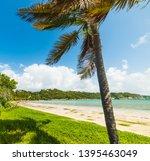 Palm Tree In A Paradise Beach...