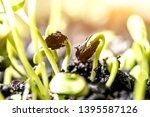 new born of plant and tree.... | Shutterstock . vector #1395587126