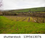 wide angle view of grapevines... | Shutterstock . vector #1395613076