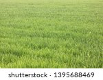 natural green background with... | Shutterstock . vector #1395688469