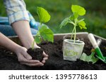 woman gardening. low section... | Shutterstock . vector #1395778613