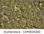 green moss on stones  background | Shutterstock . vector #1395820280