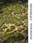 green moss on stones  background | Shutterstock . vector #1395820283
