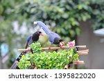 taiwan blue magpie  urocissa...   Shutterstock . vector #1395822020