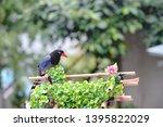taiwan blue magpie  urocissa...   Shutterstock . vector #1395822029