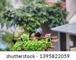 taiwan blue magpie  urocissa...   Shutterstock . vector #1395822059