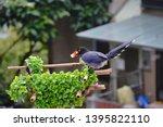 taiwan blue magpie  urocissa...   Shutterstock . vector #1395822110